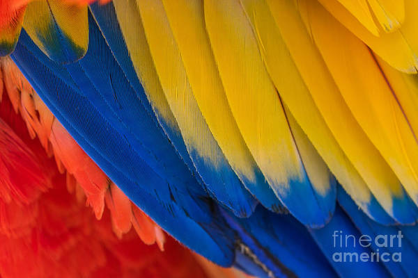 Wall Art - Photograph - Parrot. Multi-colored Feathers. Macaw by Roman Khomlyak