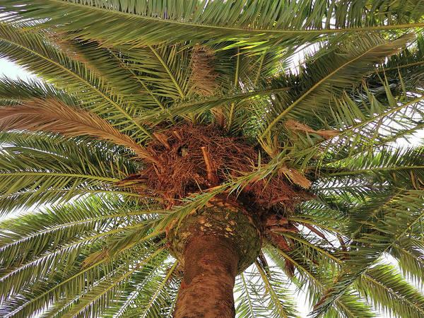 Wall Art - Photograph - Parrot Nest On Palm Tree by Art Spectrum