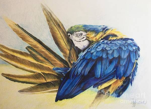 Blue Parrot Drawing - Parrot Project by Betsy Frank