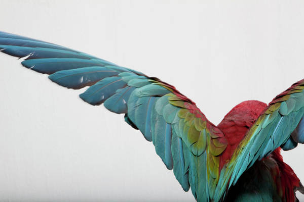 Macaw Photograph - Parrot by Zomi