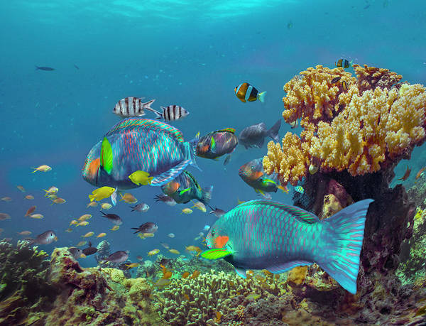 Wall Art - Photograph - Parrotfish, Anemonefish, And Sergeant by Tim Fitzharris