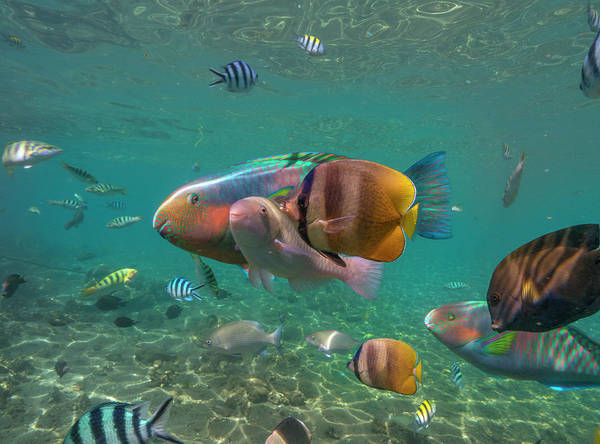 Wall Art - Photograph - Parrotfish, Butterflyfish, And Sergeant by Tim Fitzharris