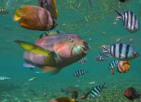 Wall Art - Photograph - Parrotfish, Butterflyfish by Tim Fitzharris