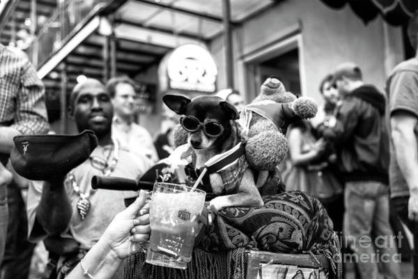 Wall Art - Photograph - Party Dog On Bourbon Street New Orleans by John Rizzuto