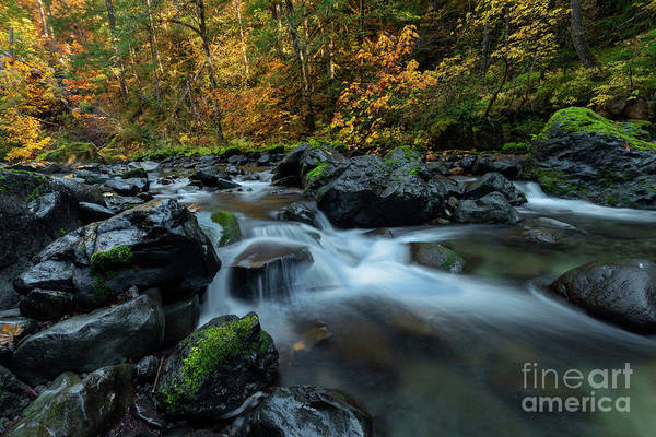 Wall Art - Photograph - Passage Of Gold by Mike Dawson