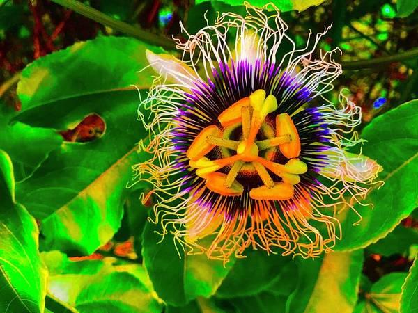 Photograph - Passion Floweer For Pele Aloha by Joalene Young