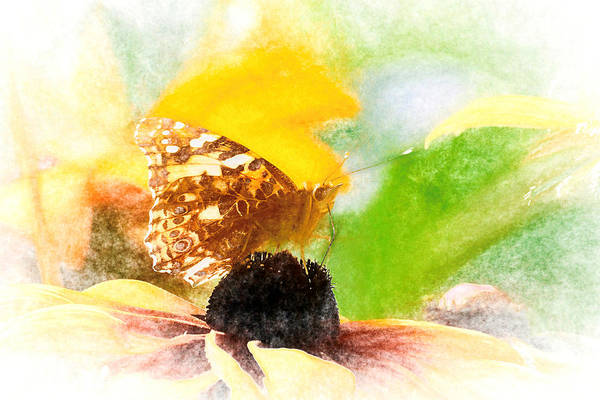 Photograph - Pastel Painted Lady Butterfly by Don Northup