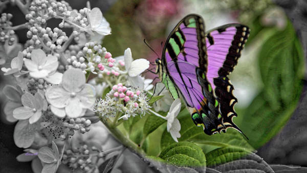 Wall Art - Photograph - Pastel Papillon by Dennis Baswell