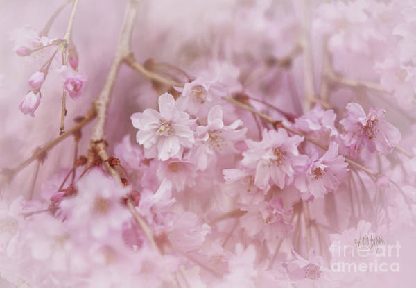 Photograph - Pastel Pink by Lois Bryan