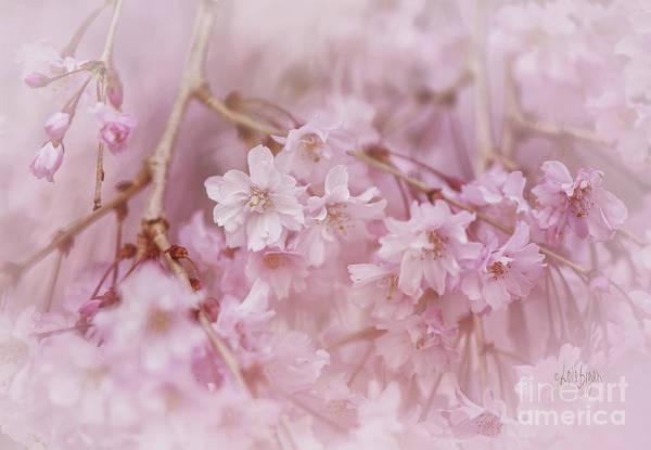 Wall Art - Photograph - Pastel Pink by Lois Bryan