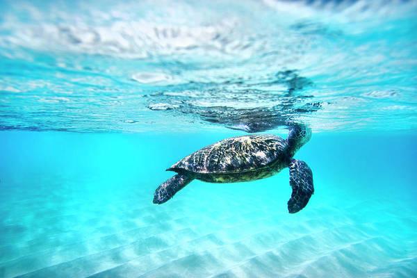 Photograph - Pastel Turtle by Sean Davey