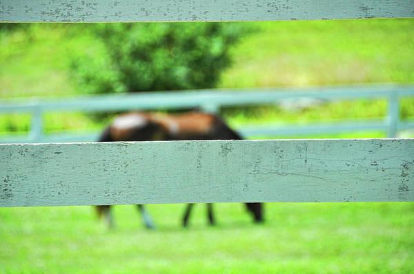 Photograph - Pasture Graze by JAMART Photography