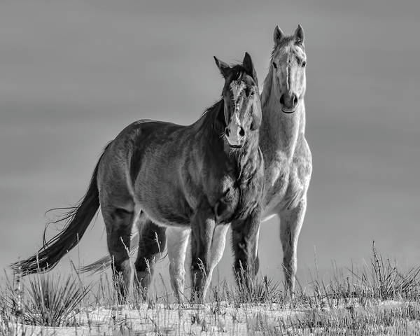 Wall Art - Photograph - Pasture Pals by Dawn Key