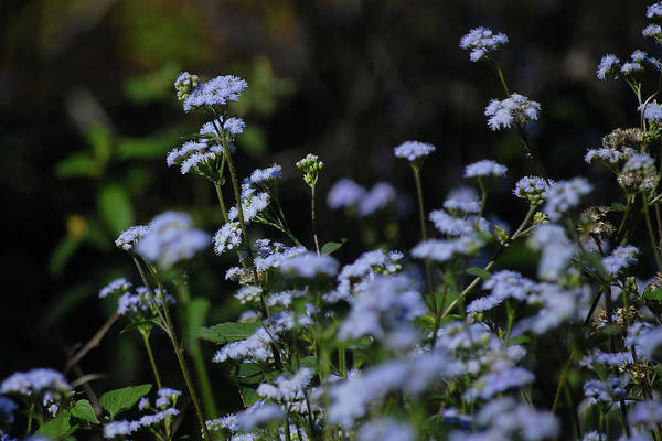 Photograph - Patch Of Blue II by Perry Correll