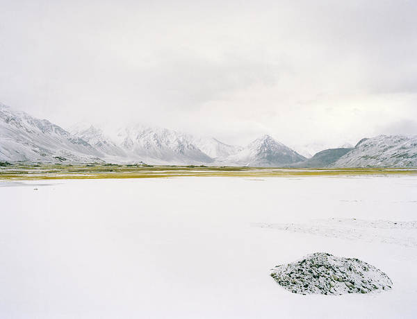 Cold Day Photograph - Patch Of Vegetation In Desolate Winter by Matthieu Paley