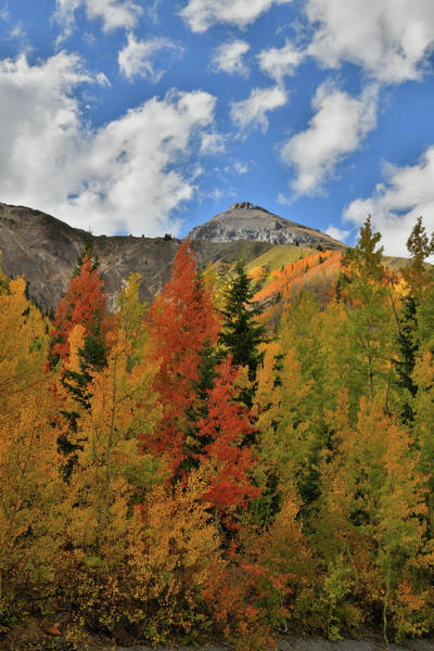 Photograph - Patchy Sunlight On Fall Colors At Red Mountain Pass by Ray Mathis