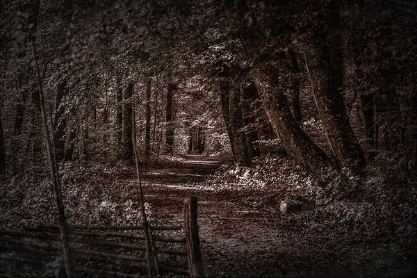Photograph - Path In Forest #i0 by Leif Sohlman