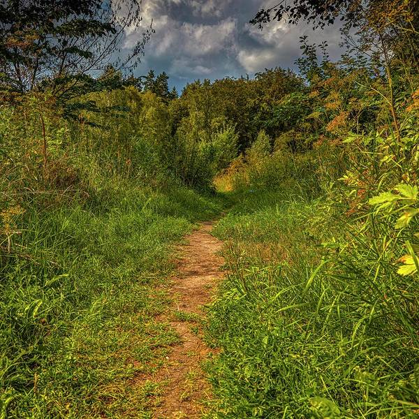 Photograph - Path In Greenary #i0 by Leif Sohlman