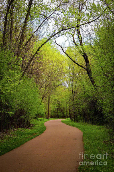 Photograph - Path In The Forest by Susan Rydberg