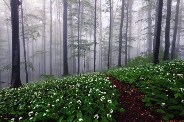 Photograph - Path In The Mist by Evgeni Dinev