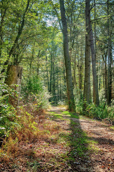 Photograph - Path In Woods by Dan Urban
