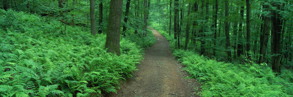 Thicket Photograph - Path In Woods Delaware County Ny Usa by Panoramic Images