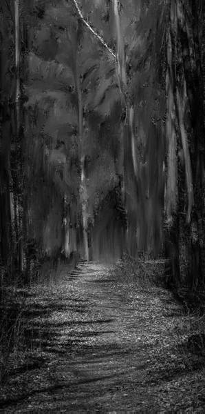 Photograph - path into fairy forest BW #i6 by Leif Sohlman