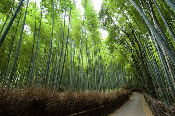 Wall Art - Photograph - Path Leading Through Bamboo Forest Near by Christopher Groenhout