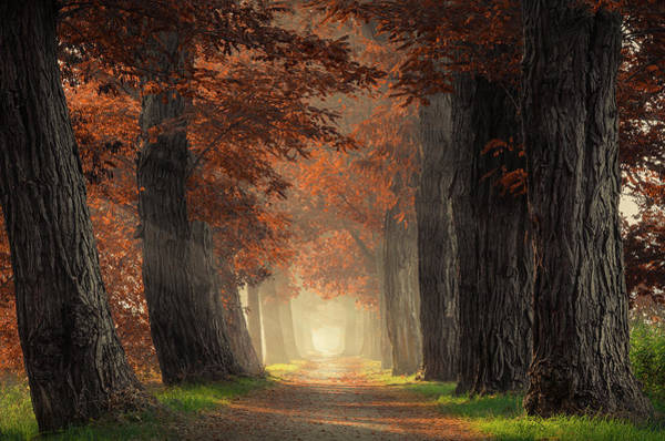 Photograph - Path Through Acacia Trees With Brown Leaves by Rob Visser