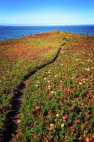 Photograph - Path To The Point by Carolyn Derstine