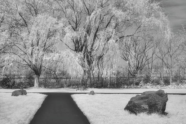 Photograph - Path To Willow Trees by Susan Candelario