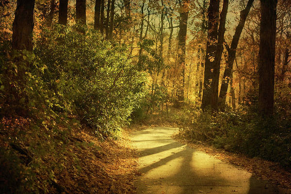 Thoroughfare Photograph - Pathway Between Woods by Jody Trappe Photography