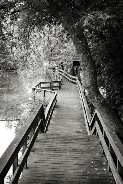 Photograph - Pathway by Michelle Wermuth
