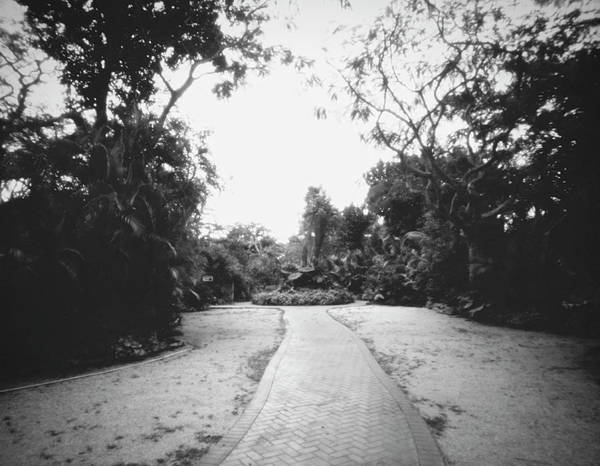 Photograph - Pathway-pinhole-041905 by Rudy Umans