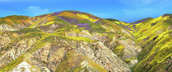 Photograph - Pathway To Heaven - Carrizo Plain Superbloom Panorama 2017 by Lynn Bauer