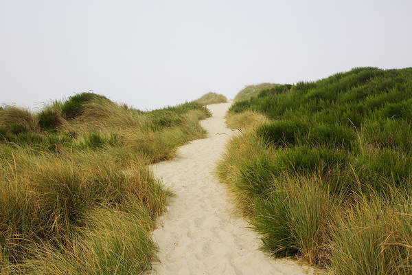Oregon Dunes Photograph - Pathway To The Beach by Holly Wilmeth
