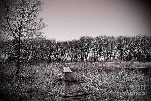 Photograph - Pathway To The Other Side by Frank J Casella