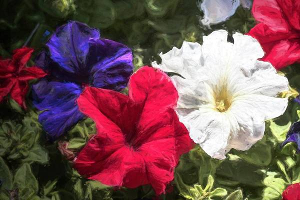 Wall Art - Photograph - Patriotic Petunias by Donna Kennedy