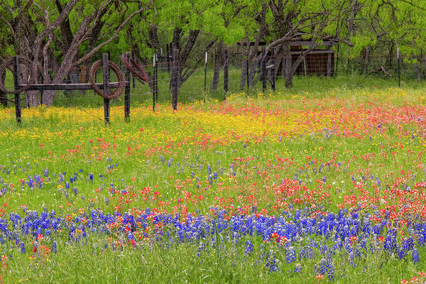Wall Art - Photograph - Pattern Of Texas Paintbrush by Adam Jones
