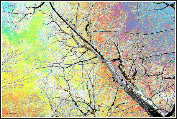 Digital Art - Patterns In Nature, Tree Limbs And Branches by A Gurmankin
