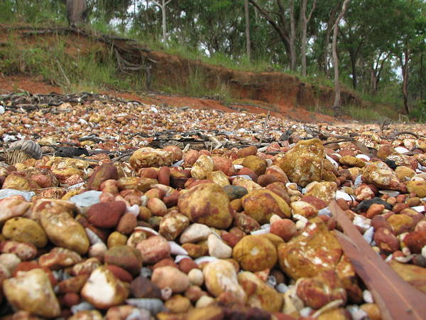 Photograph - Patterns Of Weipa Bauxite And Trees by Joan Stratton