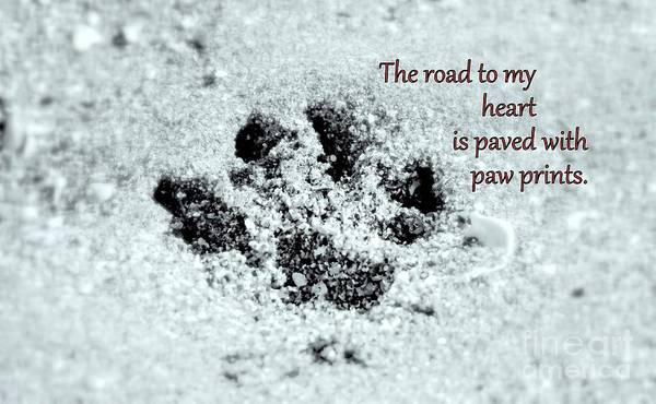 Photograph - Paw Prints by Patti Whitten