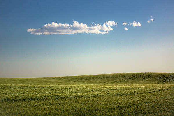 Photograph - Peace And Wheat by Todd Klassy