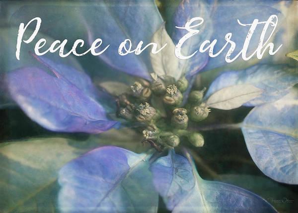 Photograph - Peace On Earth - Blue Poinsettia by Teresa Wilson