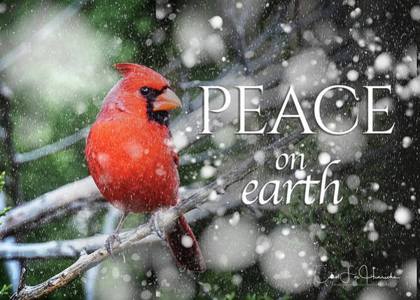 Wall Art - Photograph - Peace On Earth W/cardinal by Carol Fox Henrichs