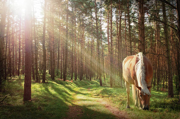 Palomino Photograph - Peaceful Afternoon In Forest by Kerrick
