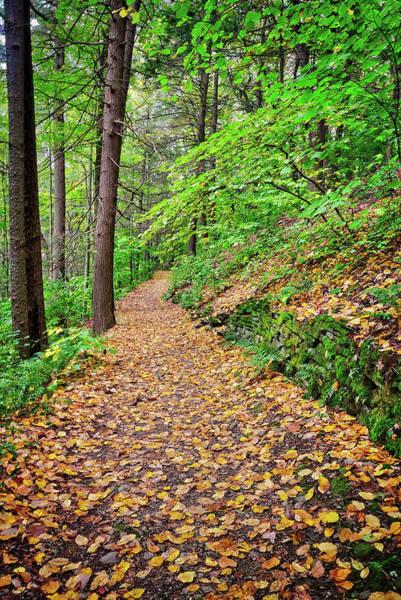 Photograph - Peaceful Autumn Trail At Watkins Glen State Park by Lynn Bauer