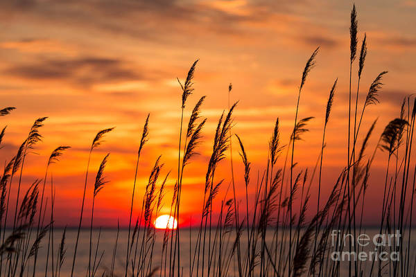 Wall Art - Photograph - Peaceful Chesapeake Bay Sunrise In by Yvonne Navalaney