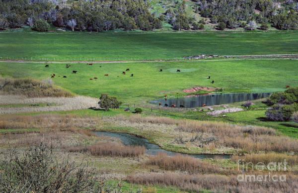 Wall Art - Photograph - Peaceful Farm In Durango by Mae Wertz