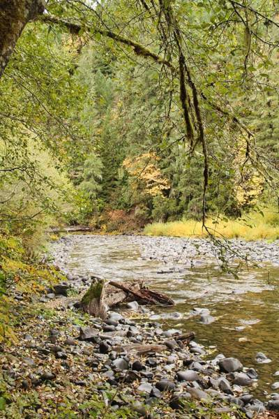 Peaceful Molalla River Art Print